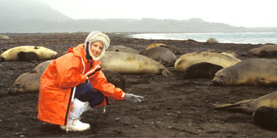 Trish Hart on Heard Island with elephant seals 1987