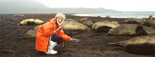 Trish Hart on Heard Island with elephant seals 1987