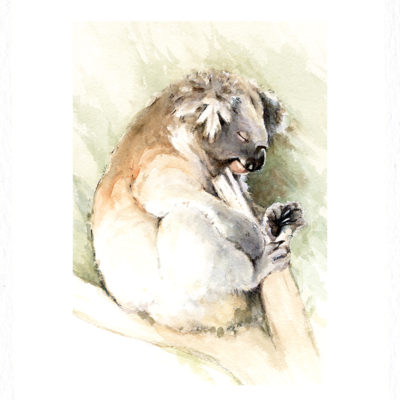 koala watercolour